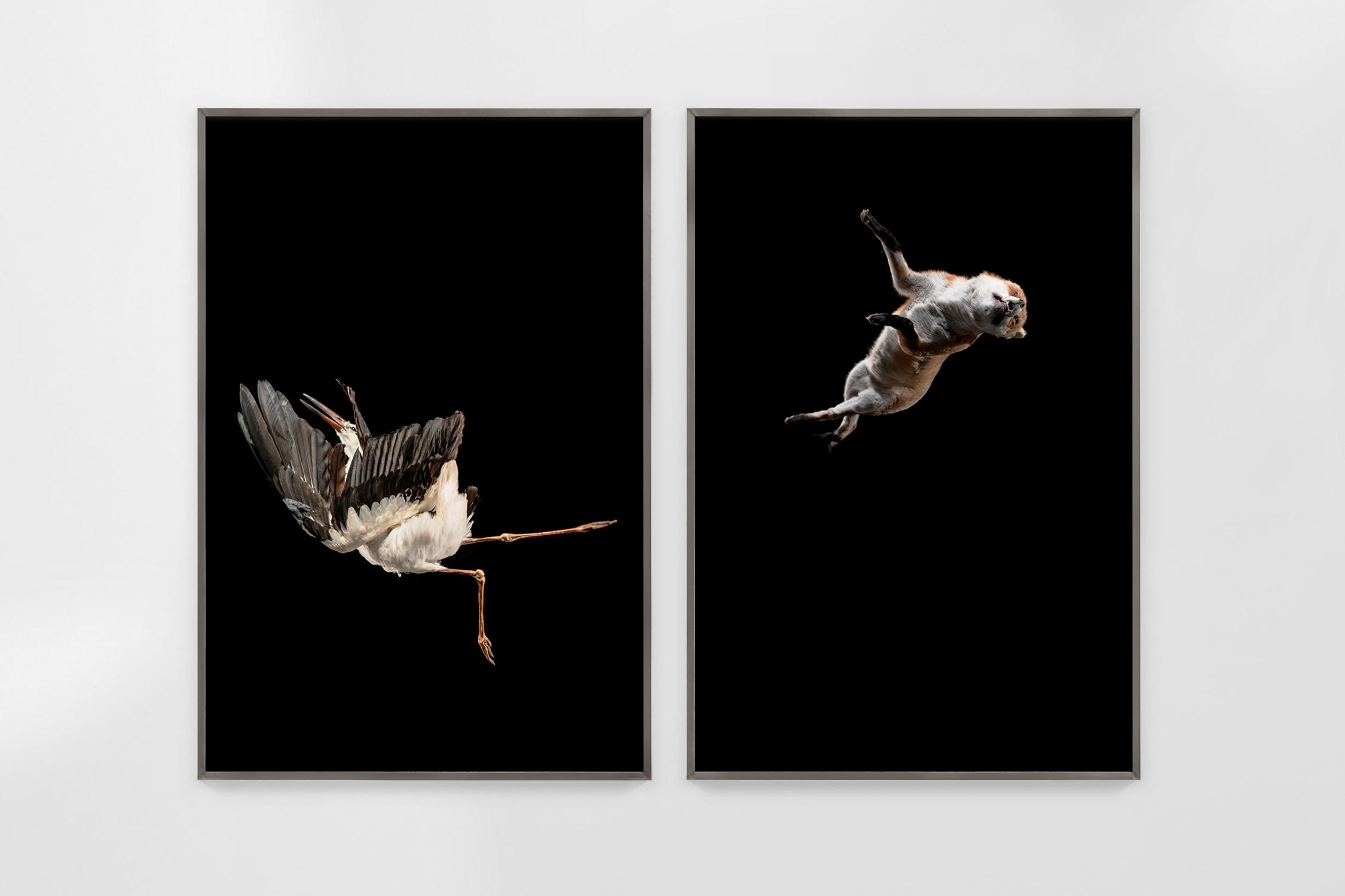 Tiere sind Engel mit Fell (Delta)