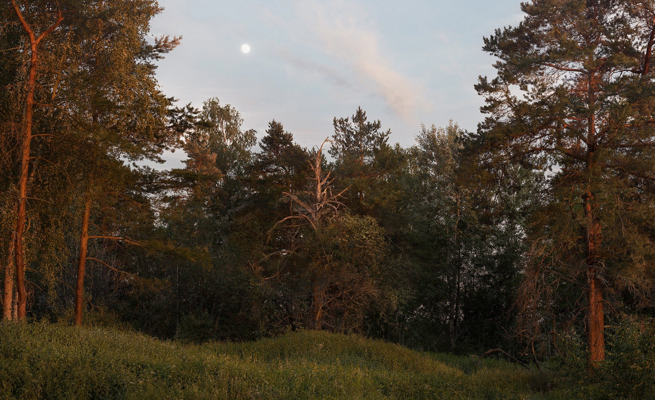 Landscape Painting (Forest)
