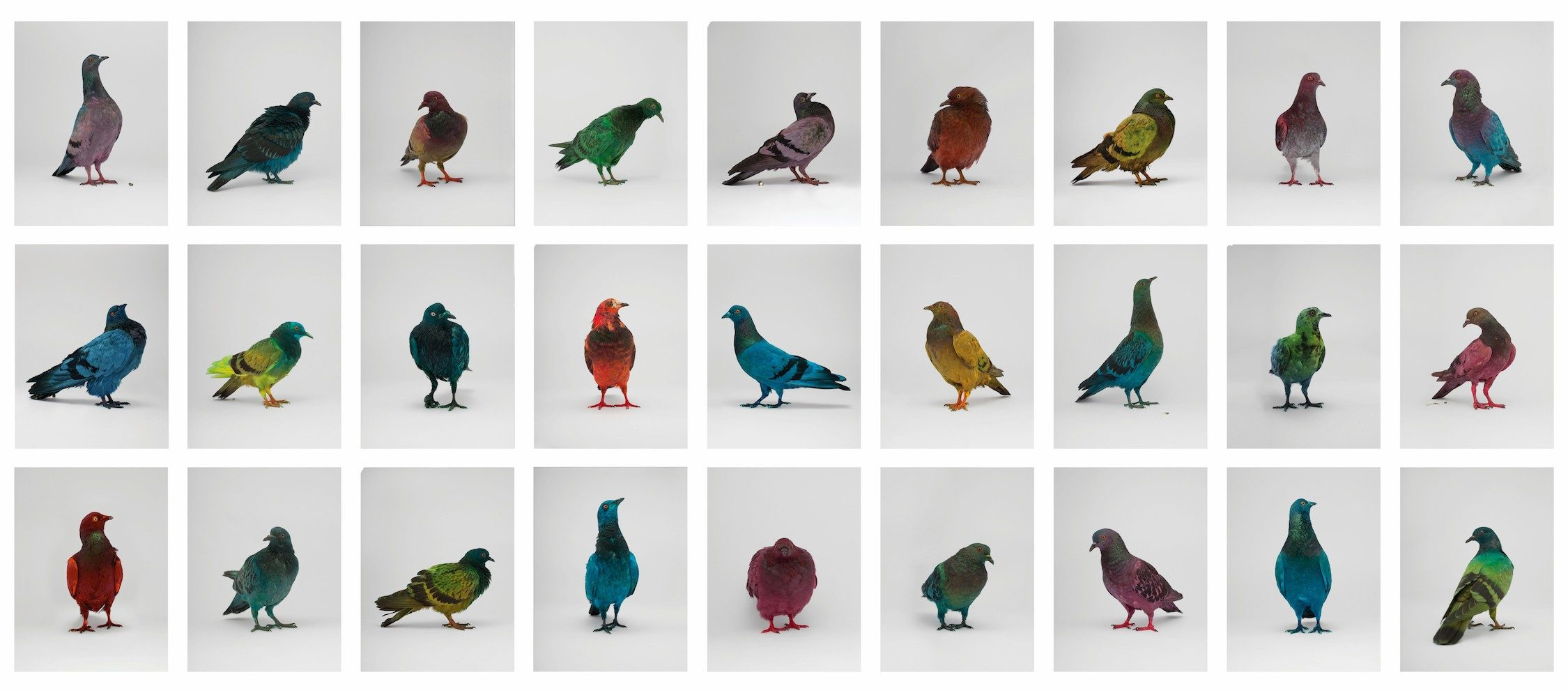 Some Pigeons Are More Equal Than Others (In cooperation with Julian Charrière)