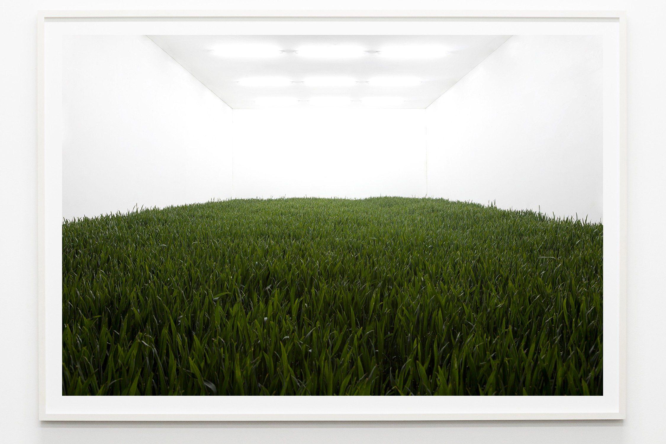 Isolation (Weizen)