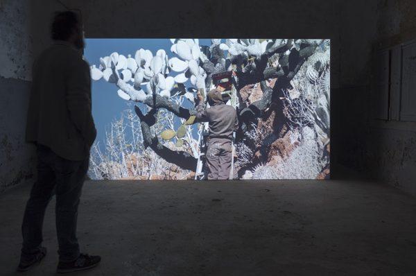 Julius von Bismarck at Anozero '19 – Bienal de Coimbra