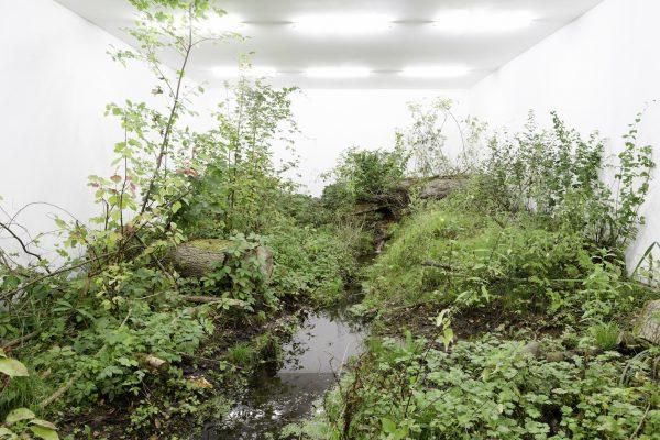 Fabian Knecht   A Green Jade Lake